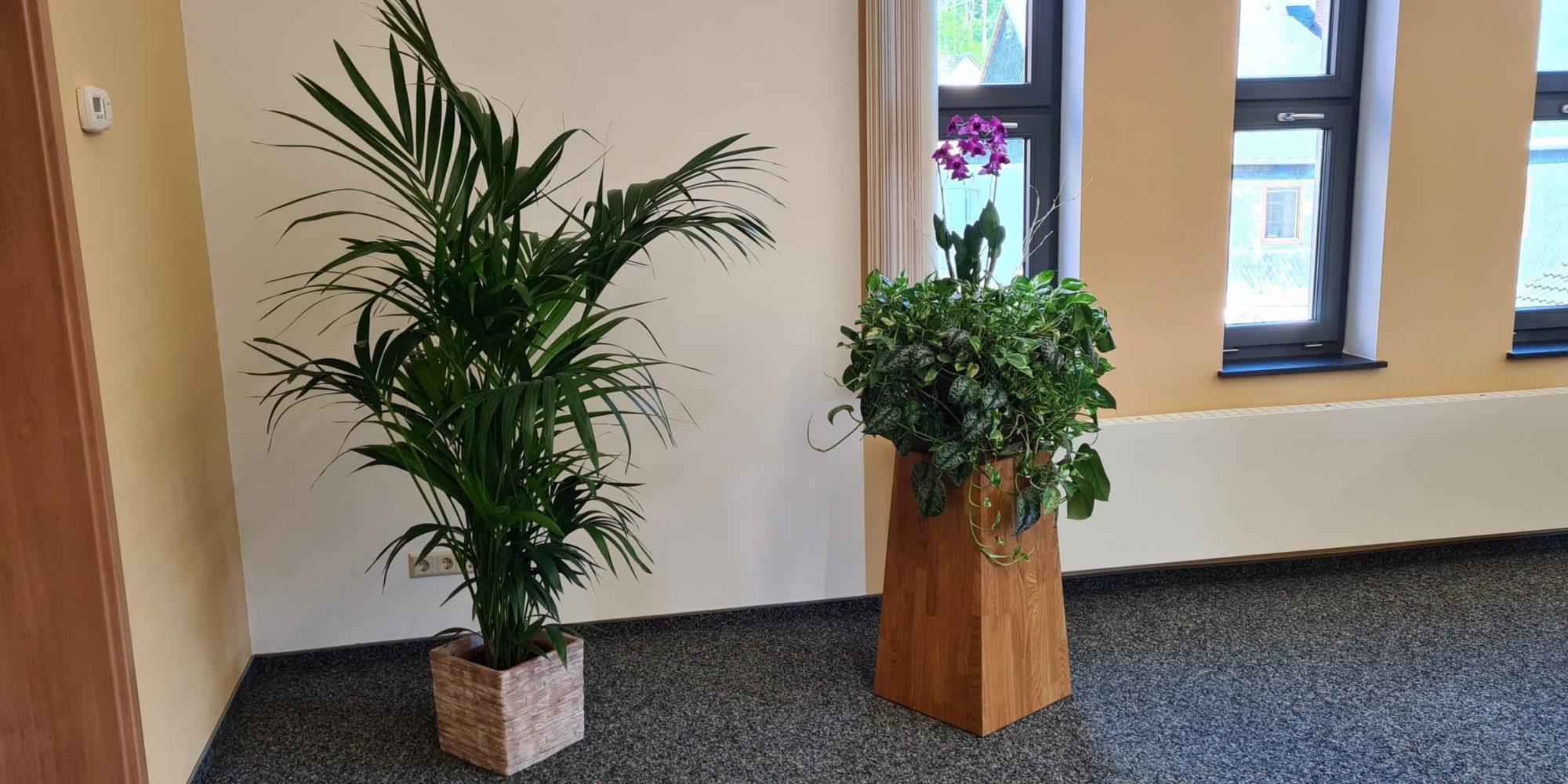 Pflanzen im Saal